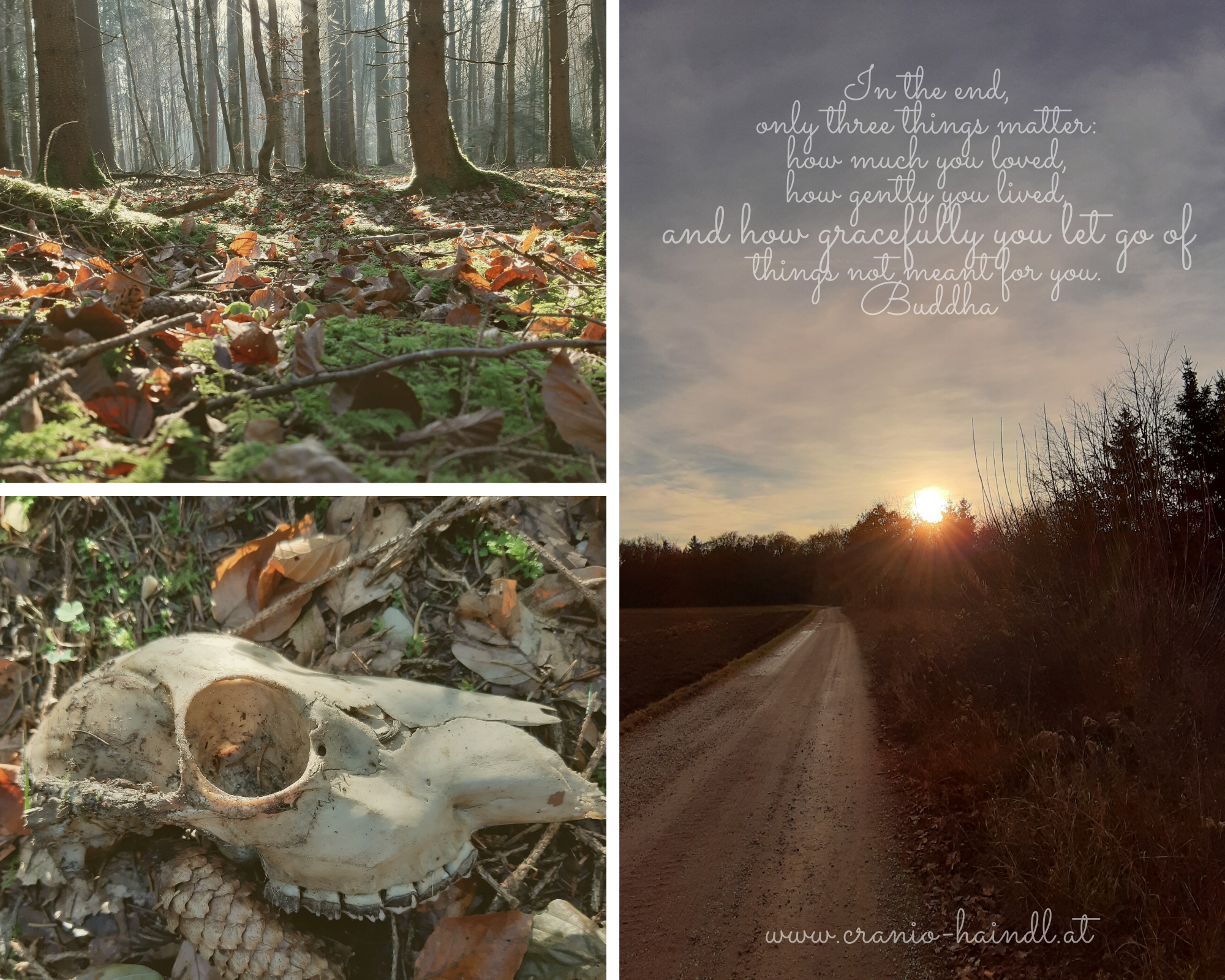Beige Forest Fashion Photo Collage.png